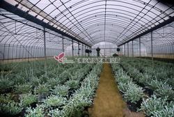 灌木盆栽苗区域